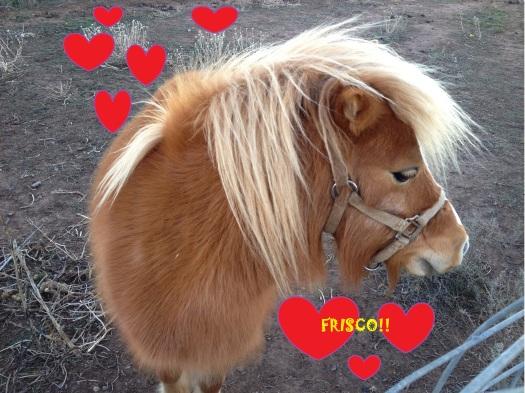 I Love You, Frisco!