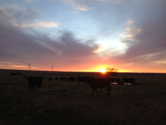 Sunset in a SW Oklahoma Cow Pasture