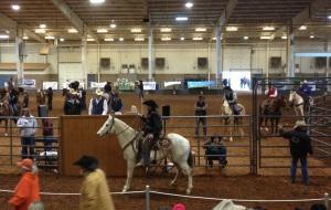 Duncan Ok Horse Sale