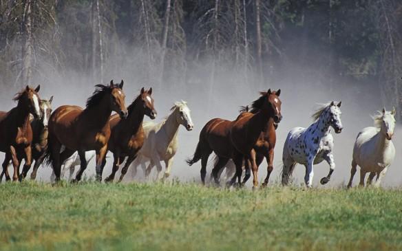 -Animals-Horses-Ranch-Montana-Fresh-New-Hd-Wallpaper--