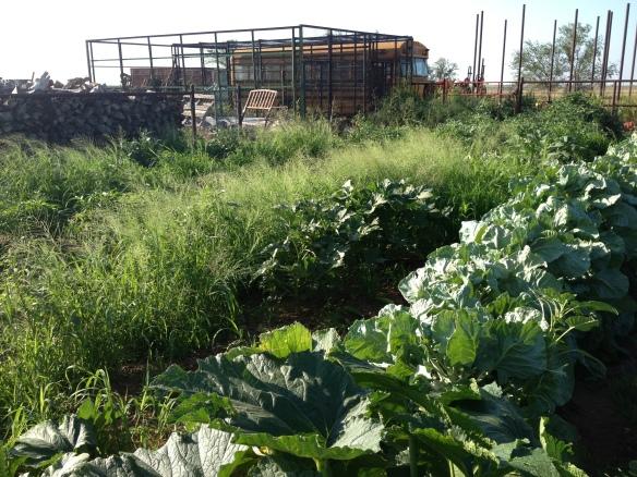 garden in oklahoma
