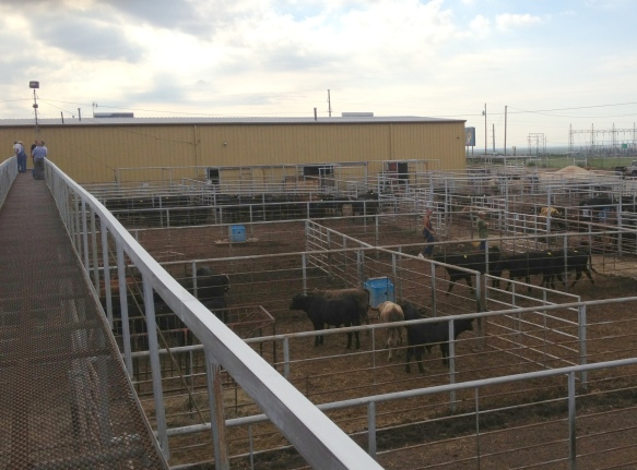 livestock auction pens