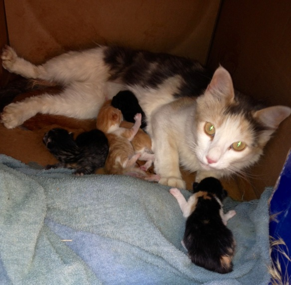 Mama cat and New Kittens