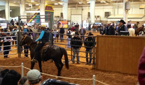 Amish Cowboy
