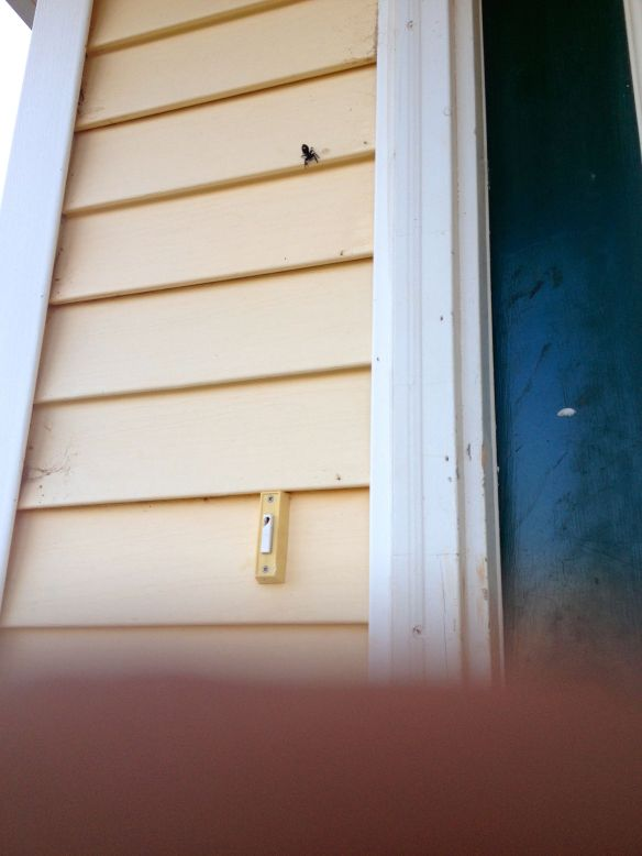 spider over a doorbell over a finger