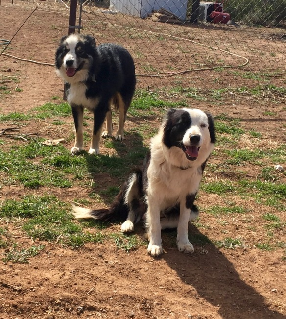 Trace and Nellie, all the dogs a person could wish for